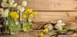 Leinwanddruck Bild - narcissus flower