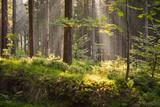 romantischer Wald mit Sonnenstrahlen als Hintergrund