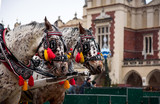 European style carriage horses on the square