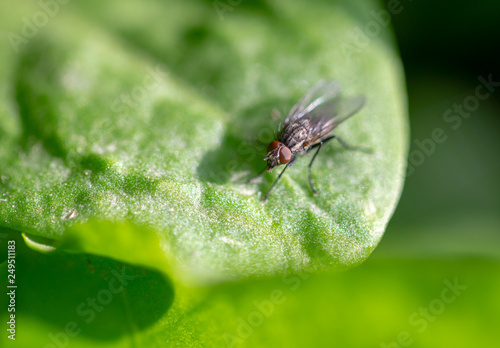 A fly on a green leaf of a plant © schankz