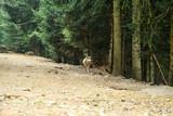 Loup Parc Alpha