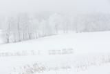 Winterlandschaft im Nebel in Bayern, Deutschland - 249561740