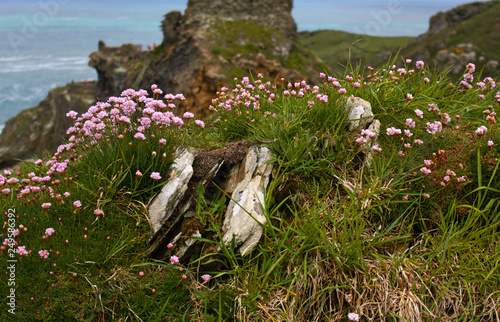 Leinwanddruck Bild flowers in a castle background- Tintagel - Cornwall - UK