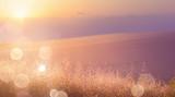 Fototapeta Natura - Art abstract  sunny meadow background © Konstiantyn