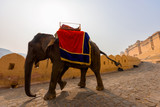 Big elephant in Amer Fort on the edge of the Aravalli Hills at Jaipur in the Indian state of Rajasthan, India.