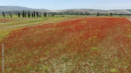 Flight over field of red poppies. Beautiful flowers and spring nature composition.