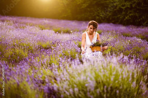 Woman at lavender flower field in summer sunset - 249690137