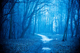 Mystical autumn forest with trail in blue fog. Beautiful landscape with trees, path, fog. Nature background. Foggy forest. Fairy Forest