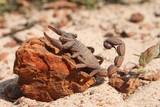 scorpion - 249716737