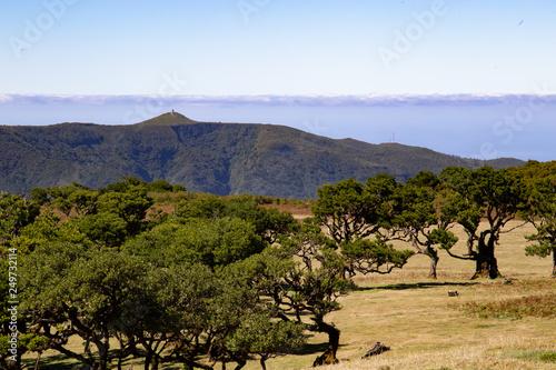 Lorbeerwald, Madeira, Fanal, feenwald