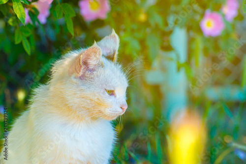obraz PCV Beautiful white cat on a background of greenery and colored plants on a bright spring summer day.