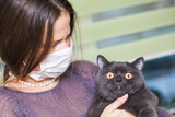 girl in medical mask on her face is holding  British cat breed.toxoplasmosis protection against cat infection for humans.