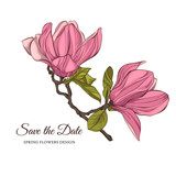 Magnolia flowers. Vector illustration.