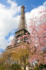 Sakura en fleur et tour eiffel à Paris © Phil Jobs