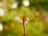 dragonfly in nature background - 249809772