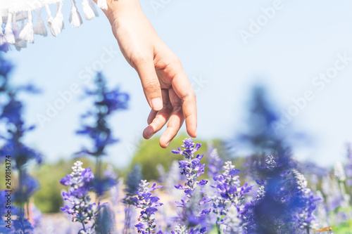 People are watching the beauty of Lavender Field. - 249814374