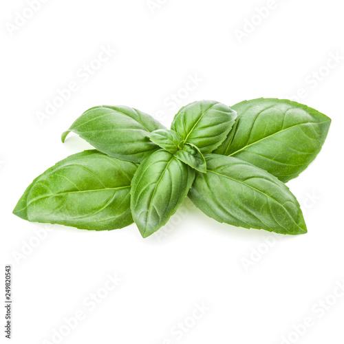 Leinwandbild Motiv Fresh sweet Genovese basil leaves isolated on white background cutout.