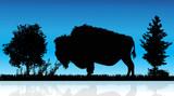 Vector illustration of buffalo in nature on white background. Wild animal.