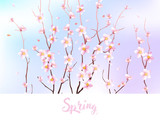 Spring design with Blooming  sakura against the sky. Cherry flowers in pastel colors
