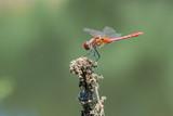 dragonfly on a leaf - 249838514