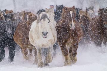 雪の中走る馬 © makieni