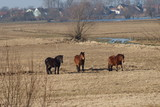 Fototapeta Horses - W słońcu © tadzio1964