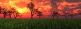 spring flower meadow at sunset, panorama of spring landscape at sunrise, the sun over the meadow,