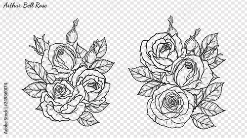 Rose ornament vector by hand drawing.Beautiful flower on transparent background.Arthur Bell rose vector art highly detailed in line art style.Flower tattoo for paint or pattern. - 249860174