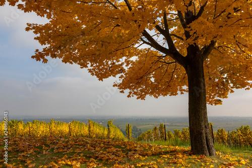 Leinwanddruck Bild Herbst