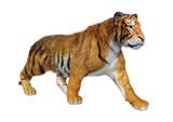 3D Rendering Big Cat Tiger on White - 249878379