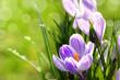 Leinwanddruck Bild - Blumen 1011