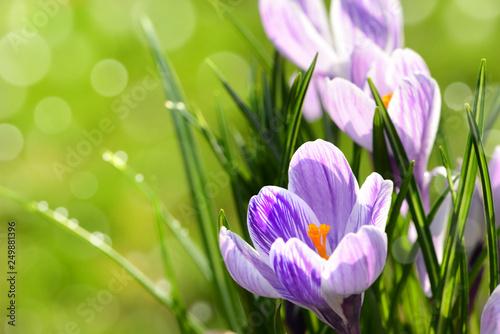 Leinwanddruck Bild Blumen 1011