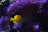 tropikalna ryba w akwarium