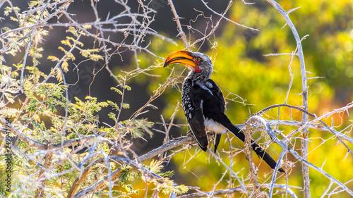 Nashornvogel Etosha Nationalpark