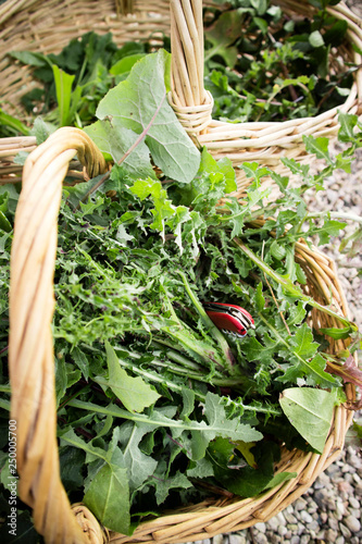 Wild grass for food use
