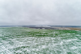 Green agricultural field under the snow. - 250020588