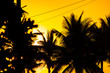 Quadro Silhouettes of coconut trees in Ipanema Rio de Janeiro