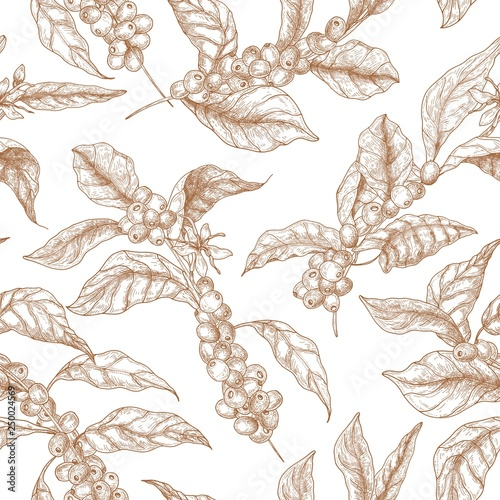 obraz lub plakat Elegant seamless pattern with coffea or coffee tree branches, flowers, leaves and fruits or berries drawn with contour lines on white background. Vector illustration in vintage engraving style.