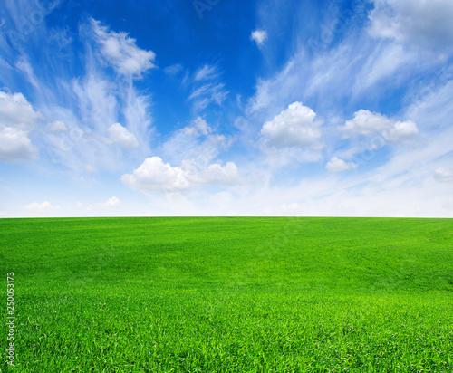 obraz PCV green field and blue sky