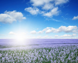 colorful flowers over blue sky