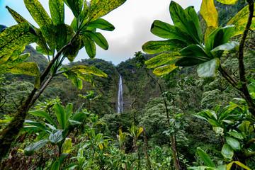 Großer Wasserfall im tropischen Wald auf Hawaii