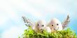 Easter eggs in nest on sky background.