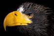 Animals: Adler
