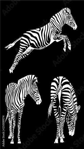 Graphical set of zebras isolated on black background,vector sketch for tattoo and design - 250099174