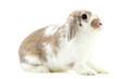 Beautiful rabbit isolated on white background