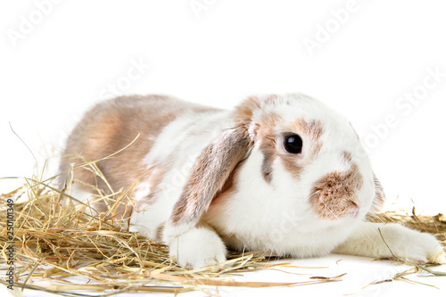 Beautiful rabbit with hay on white background © 5second