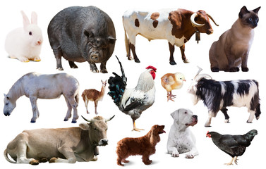 collection farm animals © JackF