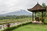 Gazebo with table and chairs by the rice fields - 250111977