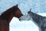 winter and horses