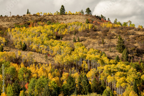 Forest in full autumn bloom on a hill with power lines © knowlesgallery